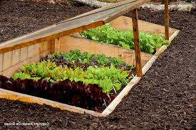 garden ideas how to start your first vegetable garden and grow
