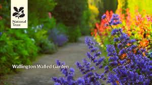 wallington walled garden national trust garden youtube