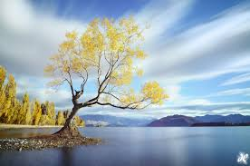 wanaka dreaming lake wanaka new zealand