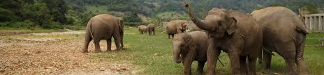 why we don u0027t ride elephants u2013 loop abroad