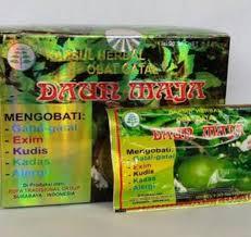 Obat Gatal jual kapsul herbal obat gatal daun maja solusi atasi gatal pada