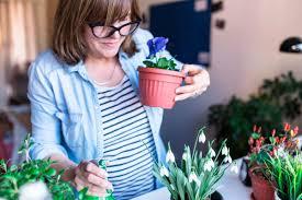 Plants Indoors by Growing Plants Indoors 29 Tips For Houseplants Reader U0027s Digest