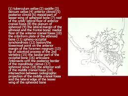 Floor Of The Cranium Cephalometric Landmarks Identifications Shanghai Jiao Tong