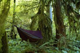 guest post how to bug proof your hammock