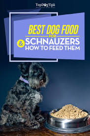 best dog food for schnauzers u0026 how and what to feed schnauzers