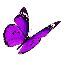 purple butterfly flying stock photo image of summer 64140880