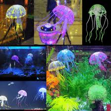jellyfish aquarium ebay