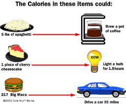 science diet light calories how calories work howstuffworks