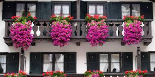 balkon und terrassenpflanzen balkon und terrassenpflanzen die richtige farbharmonie