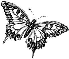 monarch butterfly line drawing butterfly full span drawings