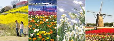 flowers in all their glory all year round chiba japan travel guide