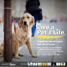 causes for animals singapore dog adoption stray management