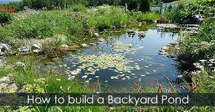 garden ponds network in your backyard diy idea 6 steps