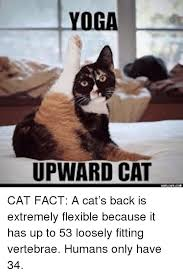 Cat Facts Meme - yoga upward cat cat fact a cat s back is extremely flexible because