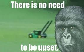 Gorilla Munch Meme - there is no need to be upset gif on imgur