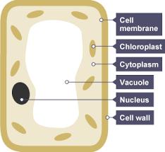 bbc bitesize ks3 biology photosynthesis revision 1