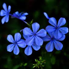 purple flower ipadwallpapers net wp content uploads 2016 01 flow