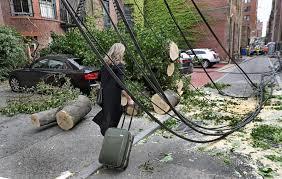 heavy winds tree in back bay the boston globe