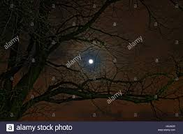 filter creepy horror moon through branches stock