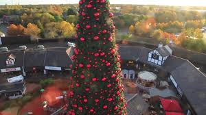 watch cheshire oaks giant christmas tree set for big switch on