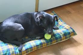 How To Make A Dog Bed How To Make A Dog Bed