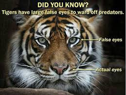 Eye Of The Tiger Meme - i completely believe that funny memes daily lol pics