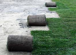 laying sod vs planting seeds