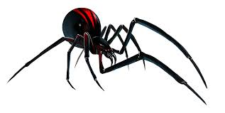 black widow clipart transparent pencil and in color black widow