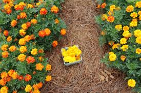 blabla kids lacing marigolds with treehouse kid u0026 craft