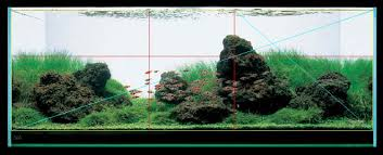 Aquascape Design How To Design And Aquascape Your Aquarium Leonardo U0027s Reef
