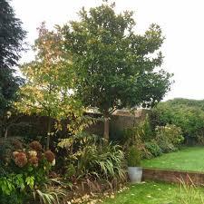 small tree for garden landscape