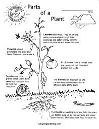 canyon gardening kinder plant parts