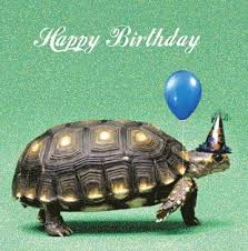 tortoise birthday card 2 60 a great range of tortoise