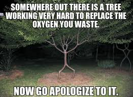 Tree Meme - 30 i see stupid people memes that will make you feel better about