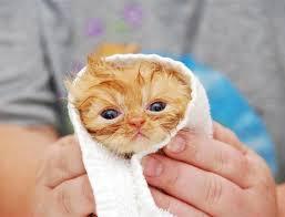newborn young kitten love meow