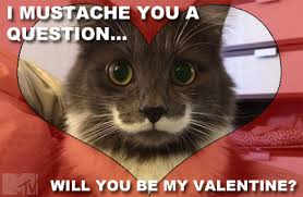 Cute Valentine Memes - cute and cuddly valentines for you wild 106 7
