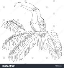 bird coloring book isolated on white stock vector 691565161