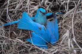 bird behavior archives birds calgary
