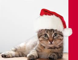 put a santa hat on your cat photo to make a christmas card by