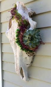 Succulent Planters For Sale by Best 10 Succulent Planters Ideas On Pinterest Succulent Wall