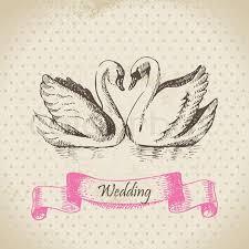swan wedding swans wedding illustration stock vector colourbox