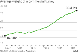 talking turkey why your thanksgiving dinner weighs more wsj