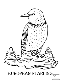 starlings european starling birds coloring pages kids