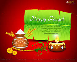 pongal wishes wallpapers photos images