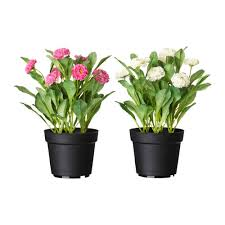 fejka artificial potted plant common daisy assorted colours 12 cm