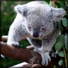 imagenes animales australia animales en australia