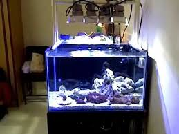 led aquarium lights for reef tanks 25 gallon reef tank with led flood lights youtube