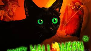1440x900 wallpaper cat breitbild