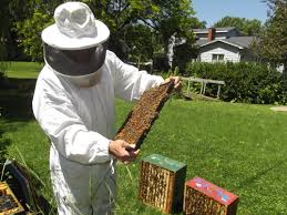 the buzz about urban beekeeping monroe county herald
