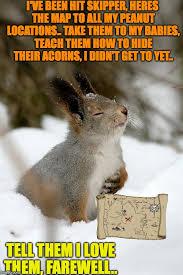 Funny Rabbit Memes - overly dramatic rabbit memes imgflip